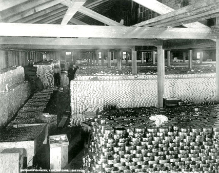 1895 年 Steveston 的 Britannia Cannery 曾生産達 150 萬罐三文魚。(City of Richmond Archives)