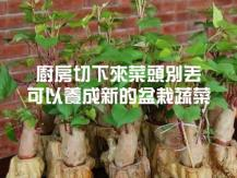 Regrowing vegetables from scrap 6 種蔬菜吃不完別扔 放土裡可再生