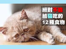 Food dangerous for cats 這 12 種食物絕對不能餵貓吃!